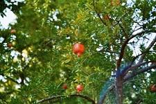 voyages-inattendus,  espagne andalousie grenade alhambra jardins 4