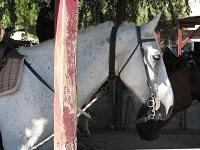 voyages-inattendus, camargue, grau du roi, chevaux 3