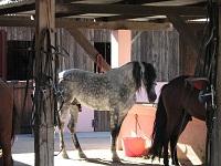 voyages-inattendus, camargue, grau du roi, chevaux 6