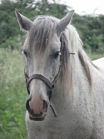 voyages-inattendus, camargue, le cailar, chevaux 3