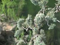 voyages-inattendus,  gorges du tarn, branches gros plan 2