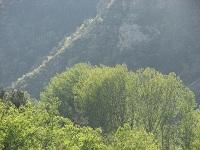 voyages-inattendus,  gorges du tarn, soleil dans les arbres